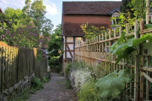 Narrow lane with garden fence