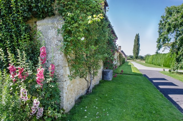 Landscaping With Climbing Plants : Climbing plants in landscaping simple